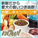 GREEN DOG ドッグフード 【ナウ】