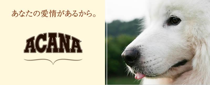 >ACANA(アカナ)