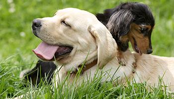 GREEN DOGのオリジナルフード