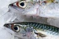 魚類(ホキ)