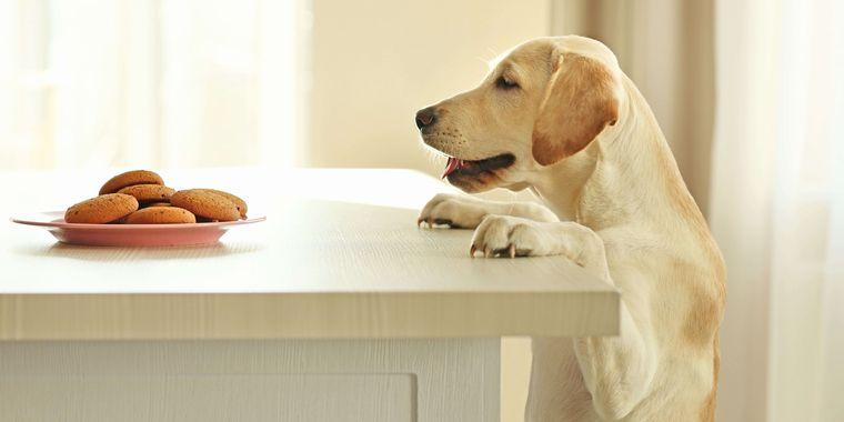 は あげ 犬 に いけない 食べ物 て