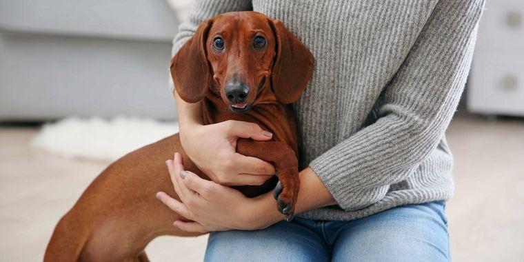 汚れや耳垢、においが気になる?犬の耳に本当に必要なホームケアとは