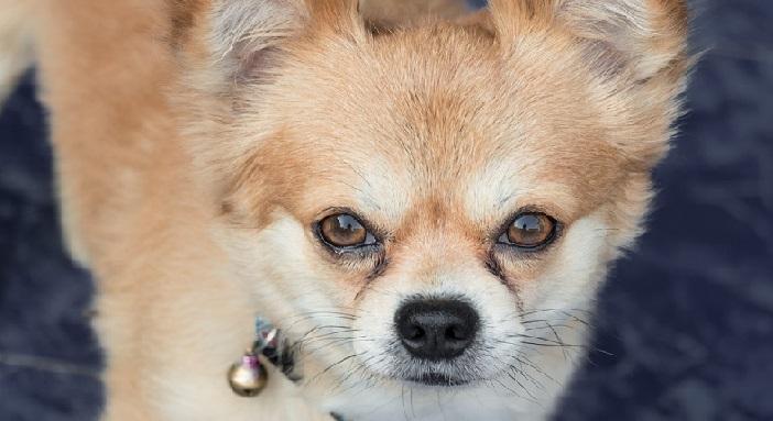 目やに 臭い 犬 犬の目やにが臭い!