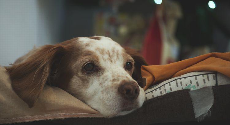 犬の皮膚にできるシミの原因とケア方法