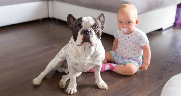 立ちはだかる犬と赤ちゃん