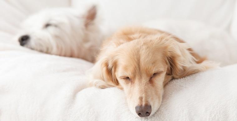 犬の睡眠時間はどれくらい 短くて大丈夫 獣医師が解説します 犬の
