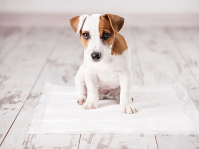 犬にトイレを覚えさせる方法