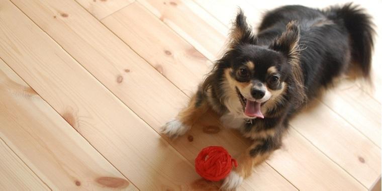 雨の日もストレス発散 愛犬と室内で楽しく 賢く遊ぶためのポイントと