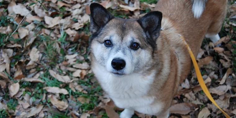 犬との暮らし 犬の心を育む8 甘え から生まれる信頼関係と社会性