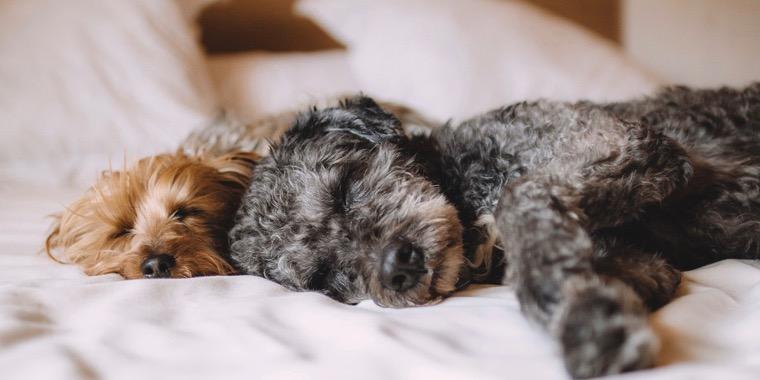 寝る 音楽 が 犬