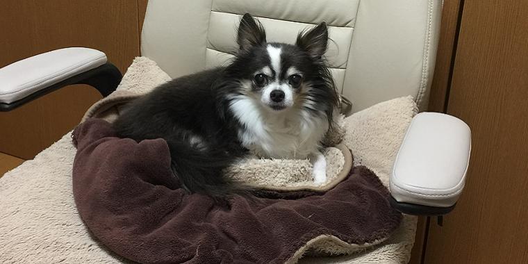 犬との暮らし 心臓病を抱える愛犬と暮らす 2 飼い主の心構え 犬の