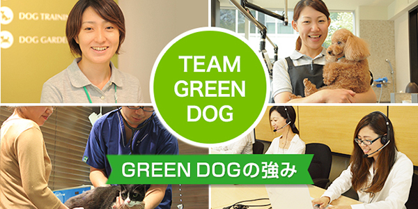 TEAM GREEN DOGについて