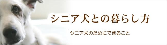 シニア犬との暮らし方 介護用品編