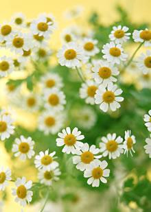 お花の大切さ