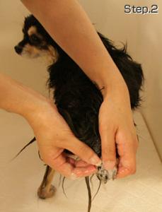 前肢・後肢を洗う。
