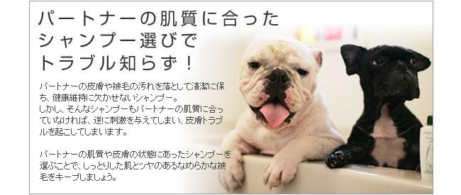 パートナー(愛犬)の肌質にあったシャンプー選びでトラブル知らず!
