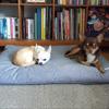 クールカバーベッド(カバー+ベッド)