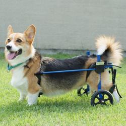 K-9 Carts【スタンダード】後脚サポート車椅子