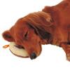 GREEN DOG老犬介護 床ずれ予防クッション ドーナツ型