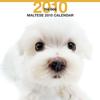 THE DOGカレンダー マルチーズ 2010