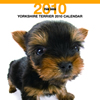 THE DOGカレンダー ヨークシャー・テリア 2010