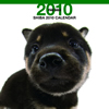 THE DOGカレンダー 柴 2010