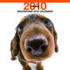 THE DOGカレンダー ダックスフンド 2010
