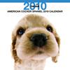 THE DOGカレンダー アメリカン・コッカー・スパニエル 2010