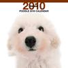 THE DOGカレンダー プードル 2010