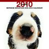 THE DOGカレンダー バーニーズ・マウンテン・ドッグ 2010