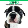 THE DOGカレンダー ボストン・テリア 2010