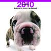 THE DOGカレンダー ブルドッグ 2010