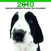 THE DOGカレンダー イングリッシュ・スプリンガー・スパニエル 2010
