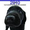 THE DOGカレンダー フラットコーテッド・レトリーバー 2010