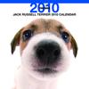 THE DOGカレンダー ジャック・ラッセル・テリア 2010