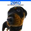 THE DOGカレンダー ロットワイラー 2010