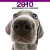 THE DOGカレンダー ワイマラナー 2010