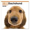 THE DOGカレンダー ダックスフンド 2011