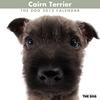 THE DOGカレンダー2012 ケアーン・テリア