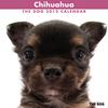 THE DOGカレンダー2012 チワワ
