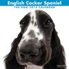 THE DOGカレンダー2012 イングリッシュ・コッカー・スパニエル
