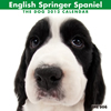THE DOGカレンダー2012 イングリッシュ・スプリンガー・スパニエル