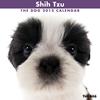 THE DOGカレンダー2012 シーズー