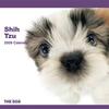 THE DOGカレンダー シーズー 2009