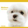 THE DOGカレンダー マルチーズ 2009