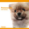 THE DOGカレンダー ポメラニアン 2009