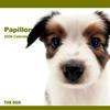 THE DOGカレンダー パピヨン 2009