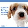 THE DOGカレンダー キャバリア・キング・チャールズ・スパニエル 2009