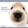THE DOGカレンダー ゴールデン・レトリーバー 2009