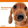THE DOGカレンダー ダックスフンド 2009